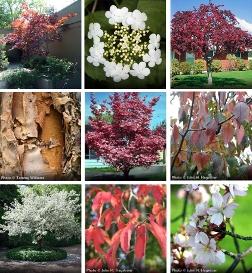 8 Great All Season Trees Arbor Day Blog