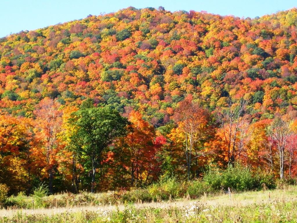 North Dakota celebrates International Peace Garden, Vermont replants trees lost in Hurricane Irene