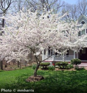 Beautiful Flowerind Tree