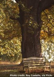 mighty-oak