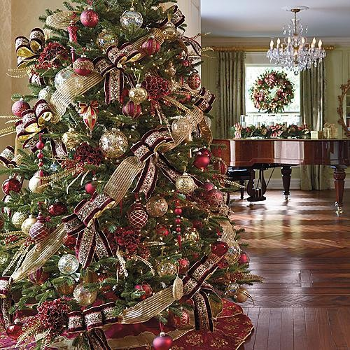 The Five Most Popular Christmas Trees Arbor Day Blog
