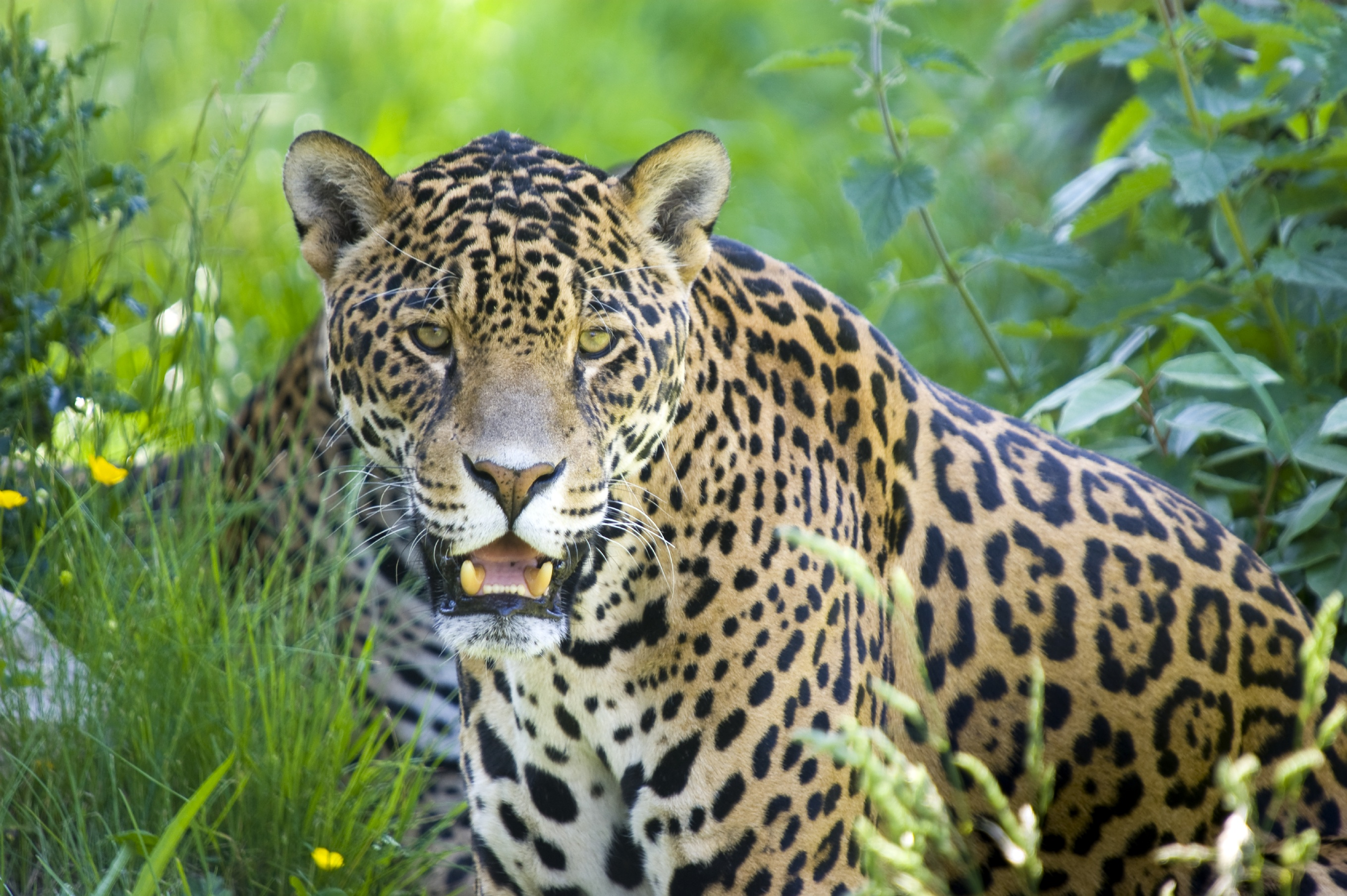Celebrating forests today and every day arbor day blog jaguar biocorpaavc