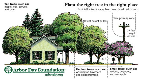 Planting Around House Foundations : Spring tree blooming planting and shipping is underway arbor
