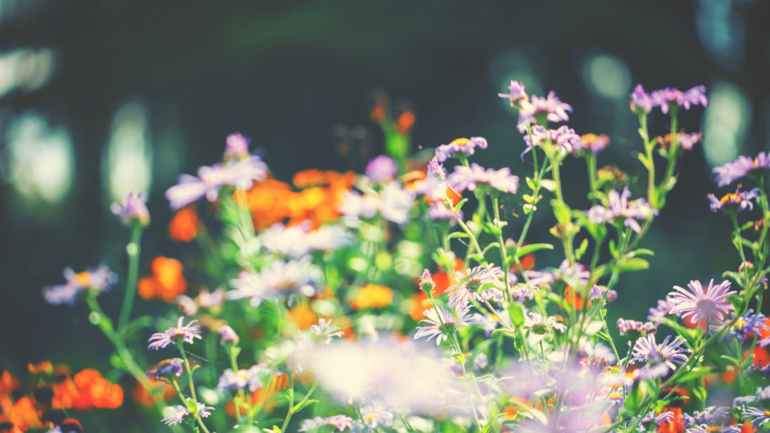 Have You Considered Adding A Rain Garden To Your Landscape? Spring Is A  Wonderful Time To Redesign Your Yard. The Soil Is Softer To Dig And The  Rainy ...