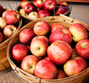 Orchard-fresh apples are ready for purchase at Arbor Day Farm's Apple House Market, Nebraska City, Nebraska.