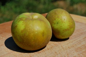 Heirloom Apple from Arbor Day Farm: