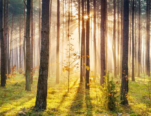 sunlight through trees black - photo #49