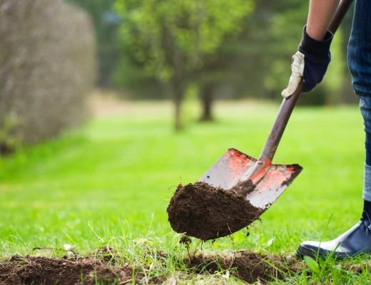 tree-planting-sized