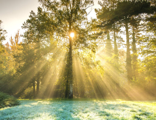 Sun Flare through Trees