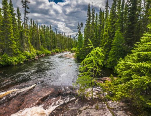 forest-evergreen-stream
