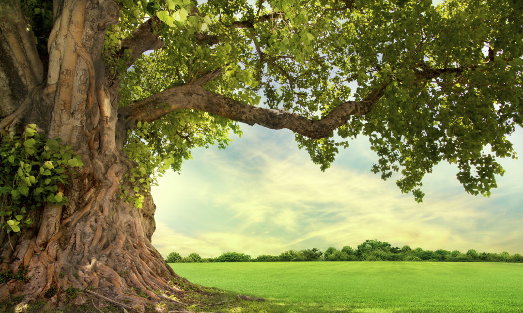 Five Trees That Need A Friend Arbor Day Blog