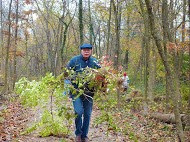 "Westerville Parks and Recreation volunteers remove invasive honeysuckle during the annual ""Make a Difference Day"" cleanup event at Boyer Nature Preserve."