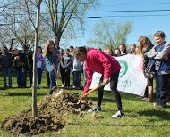 The winner of the 2015 Arbor Day Art Contest plants a new tree at her school in Westerville.