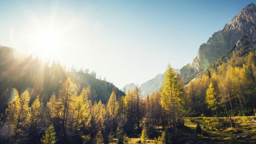 fall-trees-mountains