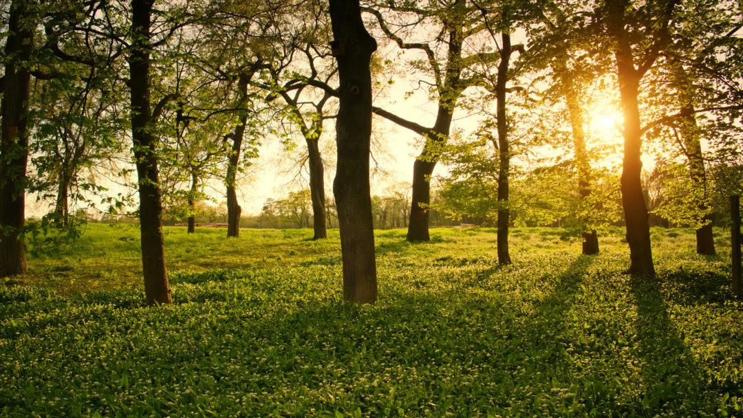 sunlight-through-trees-park