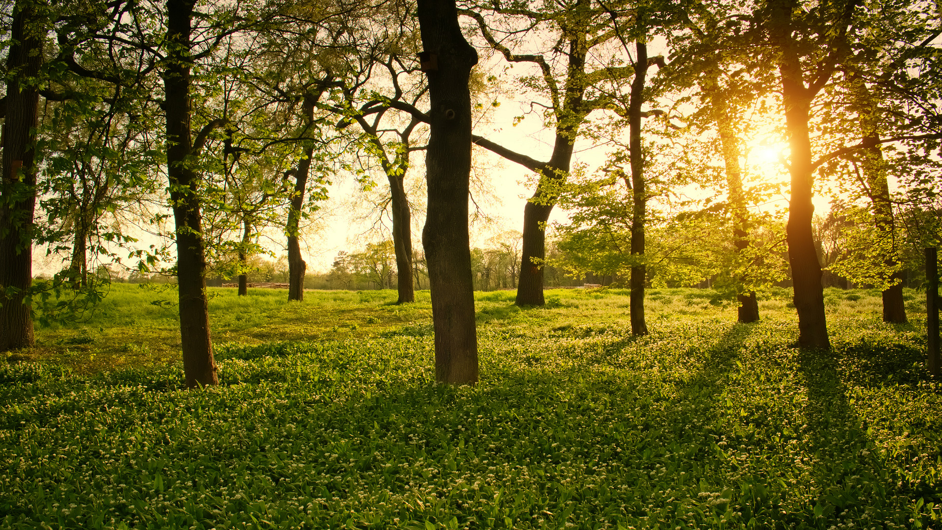 What I Learned As A Tree Board Member Arbor Day Blog
