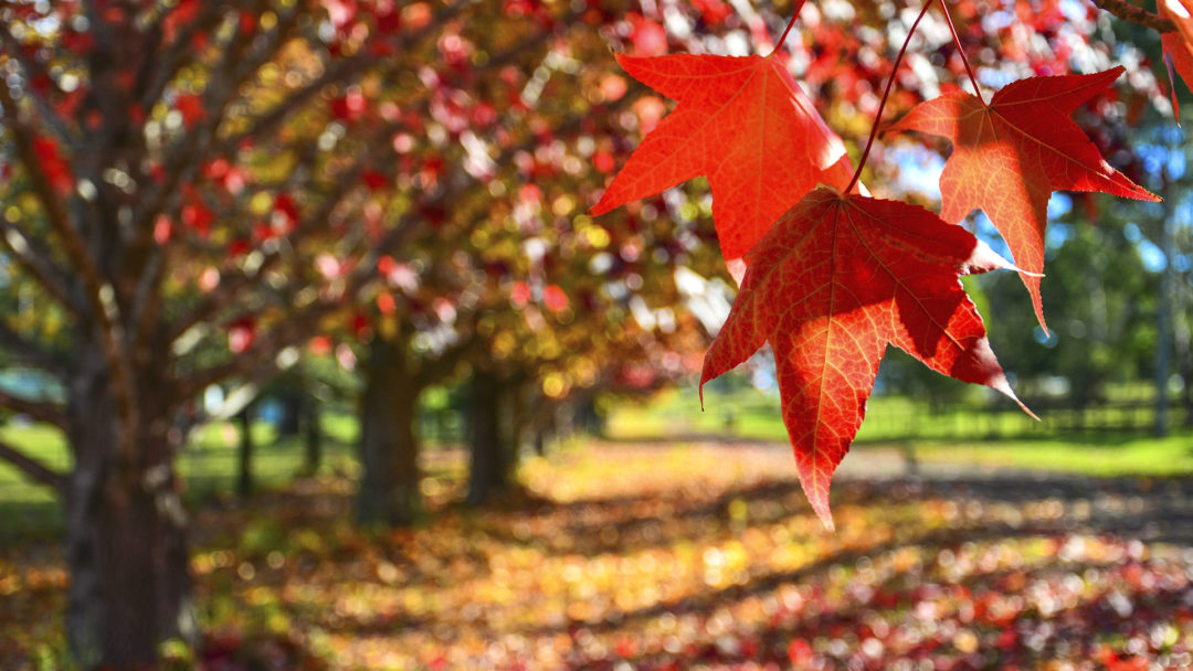 Why It S Great To Plant Trees In The Fall Arbor Day Blog