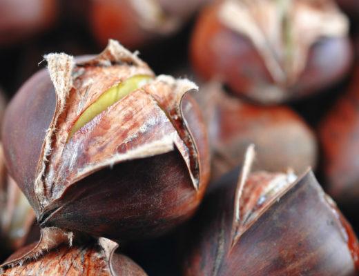 chinese-chestnut