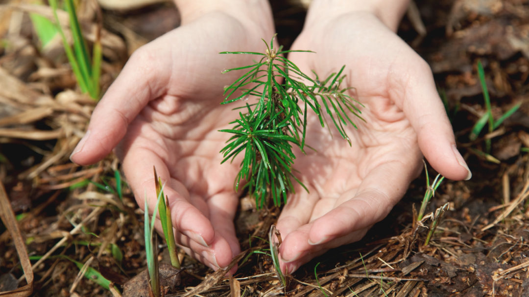 Ask An Arborist How Do I Plant Bare Root Trees