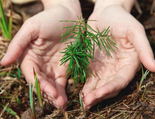evergreen-seedlings-hands
