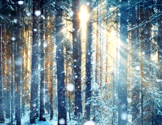 winter-forest-sunflare