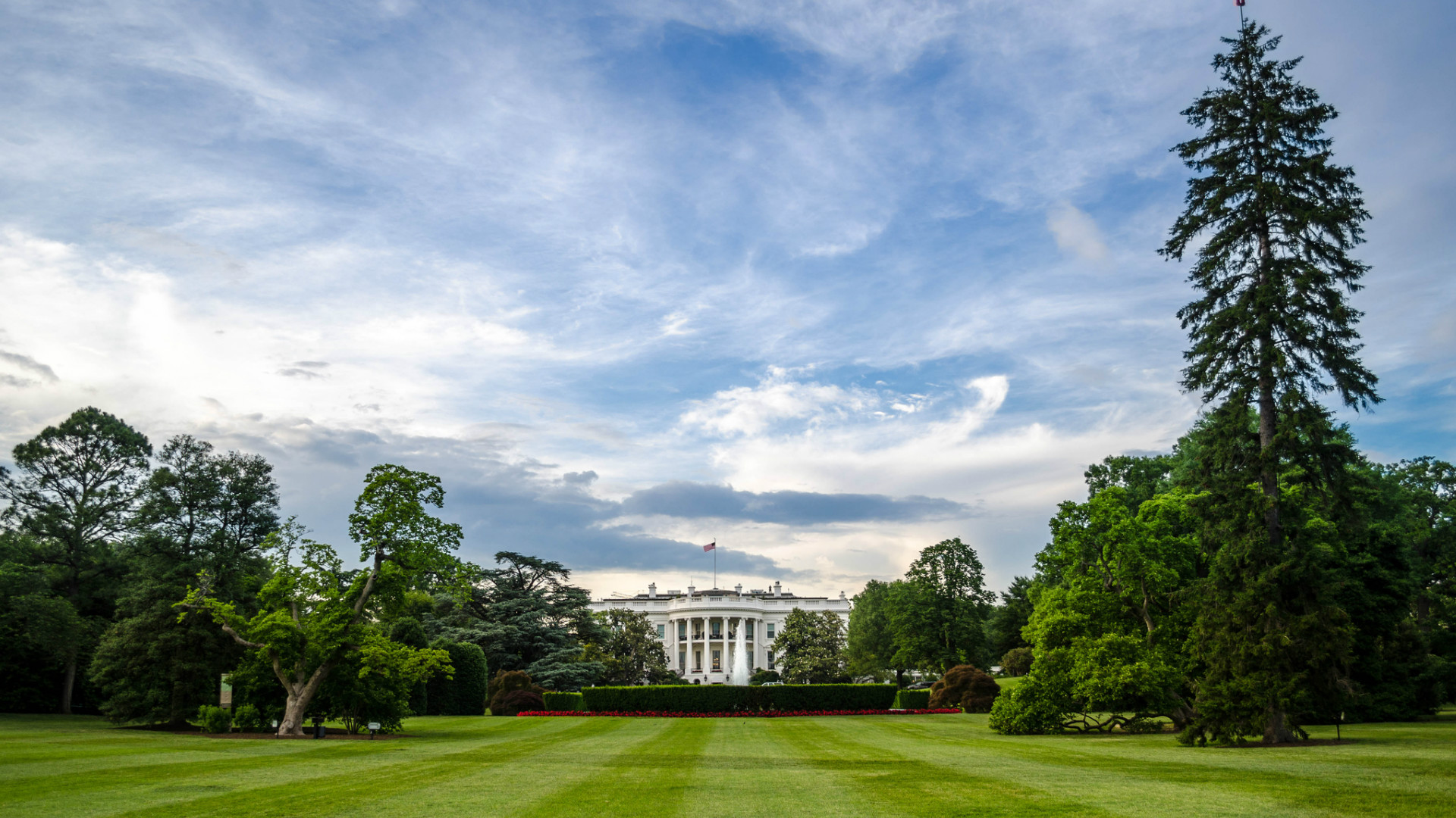 6 fun facts about presidents and trees