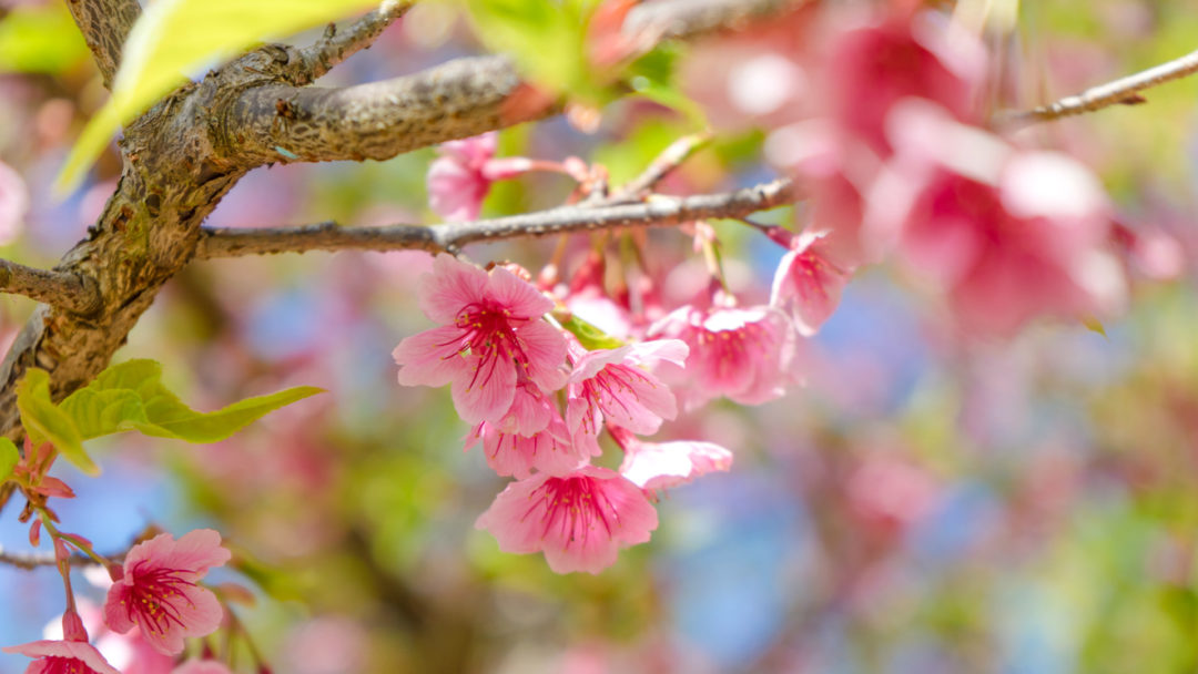 Top 10 flowering trees harmon and sons although the weather says otherwise in some parts of the country many people will start their spring planting flowering trees are mightylinksfo