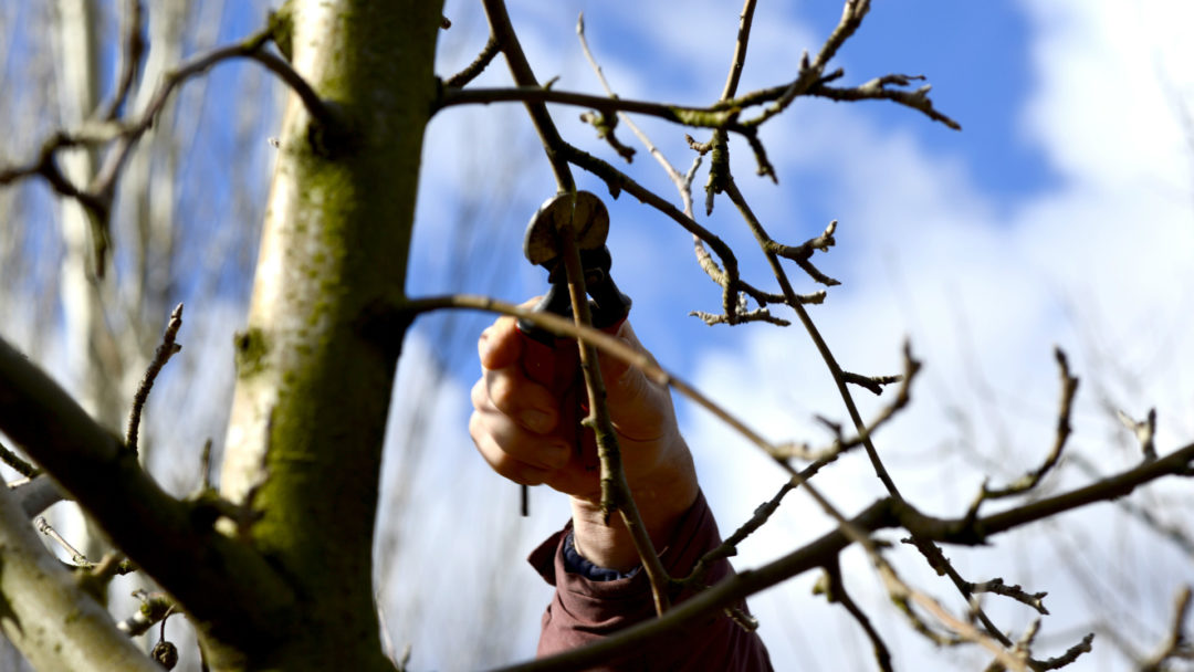 Arborist Advice Why Should You Prune Your Trees During The