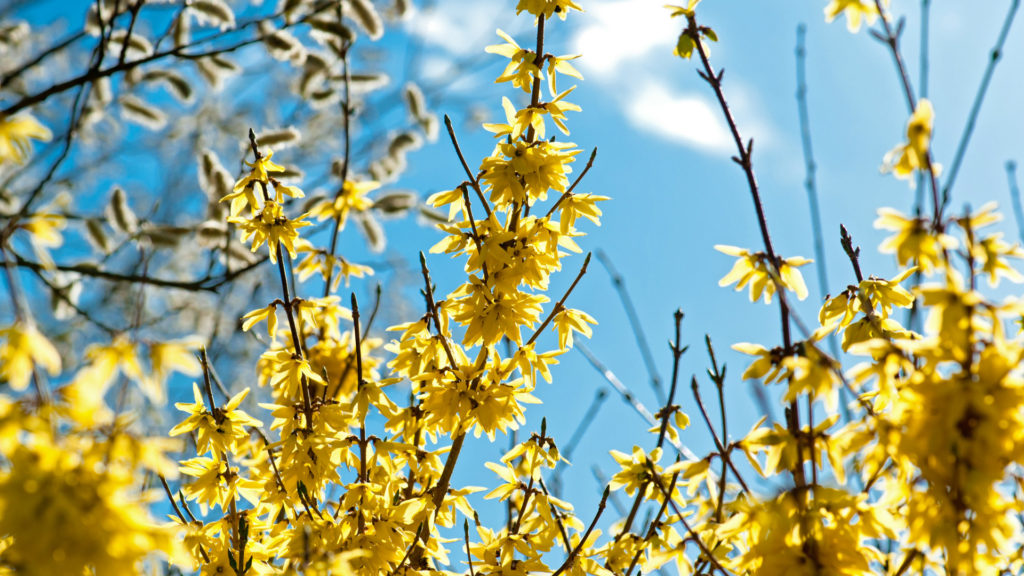 Top 10 Flowering Trees