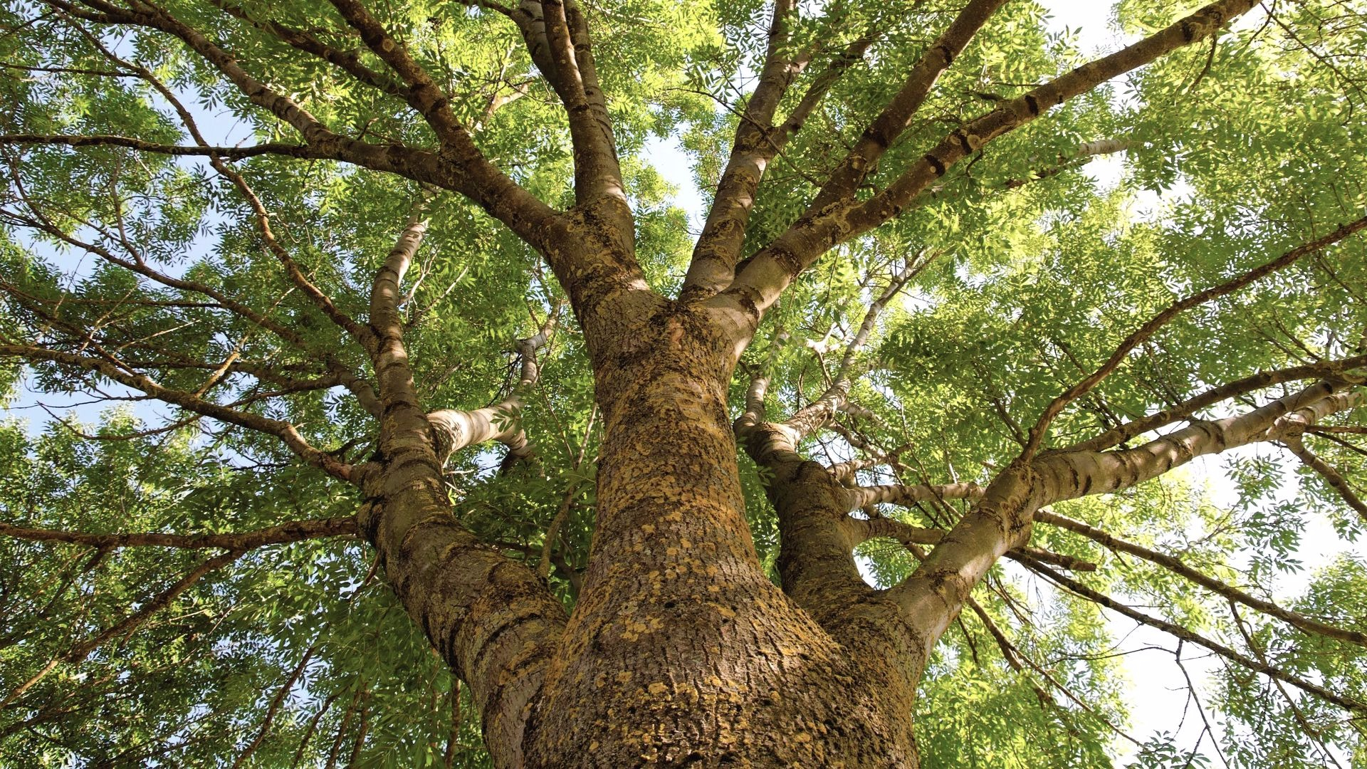 New Beginnings Arbor Day Blog