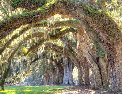 Tree Care & Planting