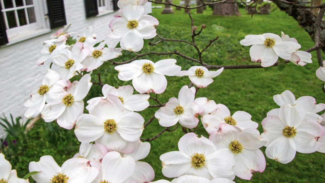 Which Small Trees Will Work For Your Yard Arbor Day Blog