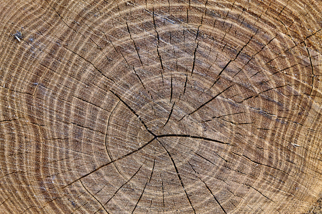 How Do Rings On A Tree Form