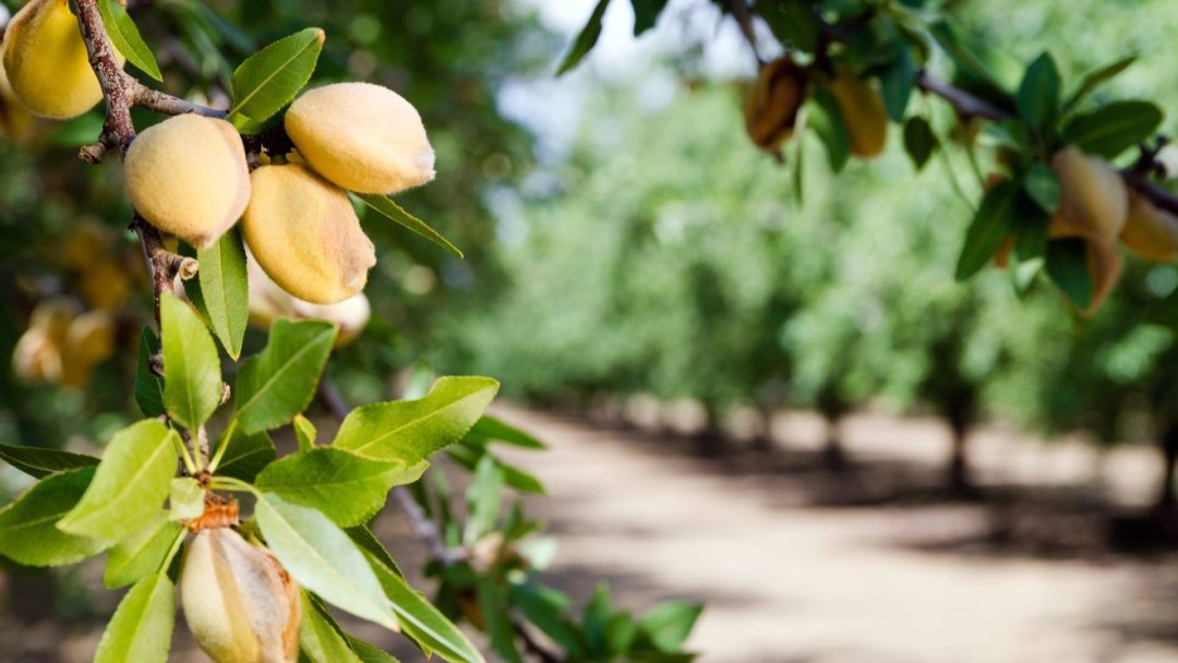Are You Considering Adding Nut Trees Or Bushes To Your Yard The Secret Growing High Yielding Is Selecting Right Tree For Hardiness