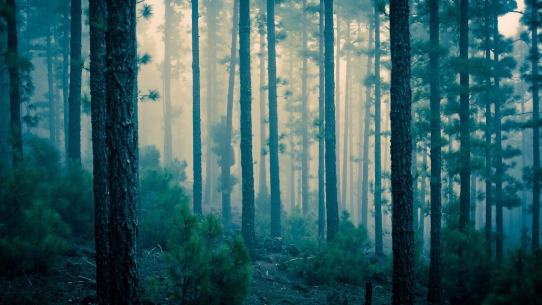 6 Haunted Forests Perfect for Thrills | Arbor Day Blog