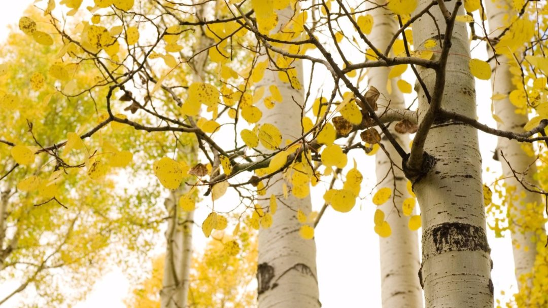 10 Most Por Nursery Trees And Shrubs Shipping This Fall