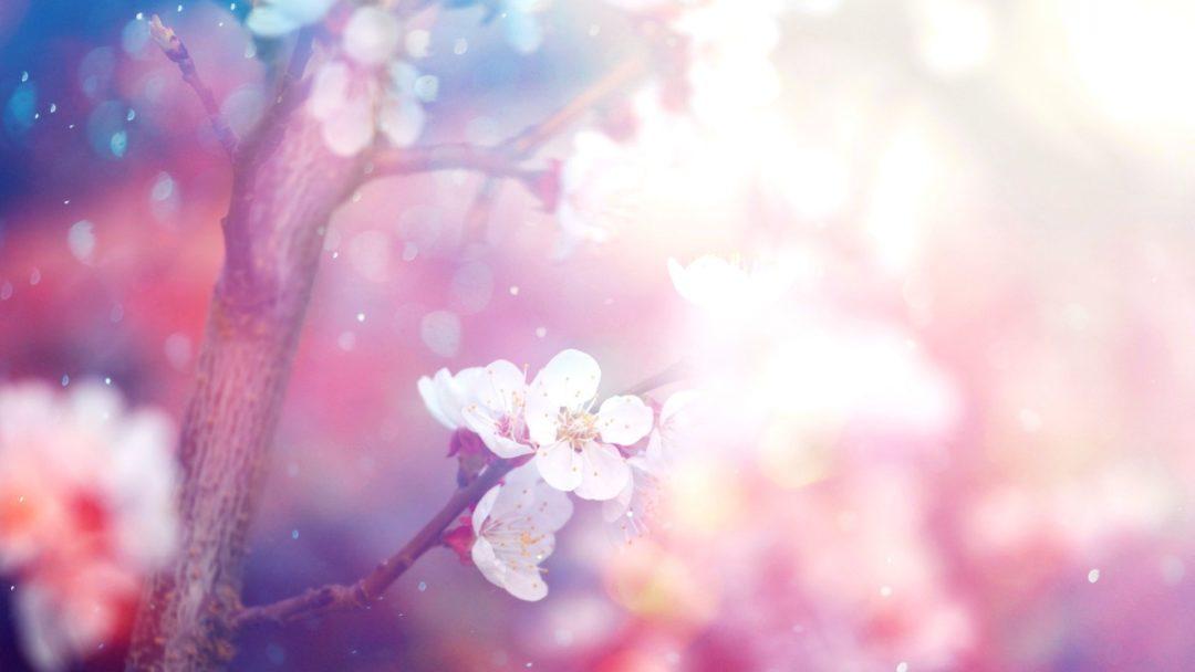 5 Stunning Flowering Trees Arbor Day Blog