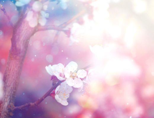 Top 10 flowering trees 5 stunning flowering trees mightylinksfo