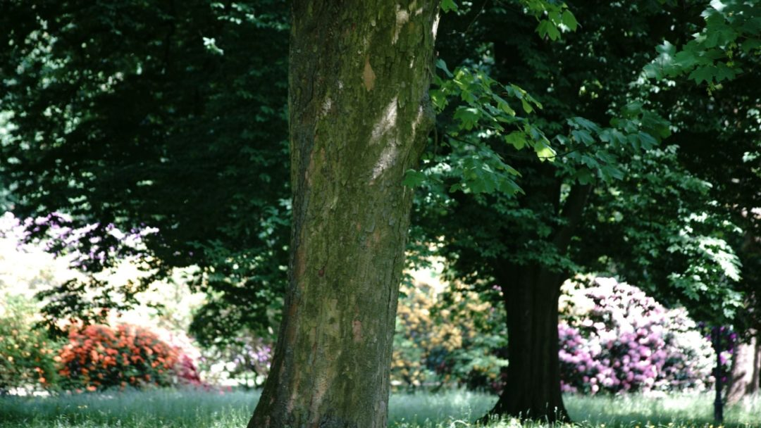 10 Drought-Tolerant Trees That Will Throw Shade | Arbor Day Blog