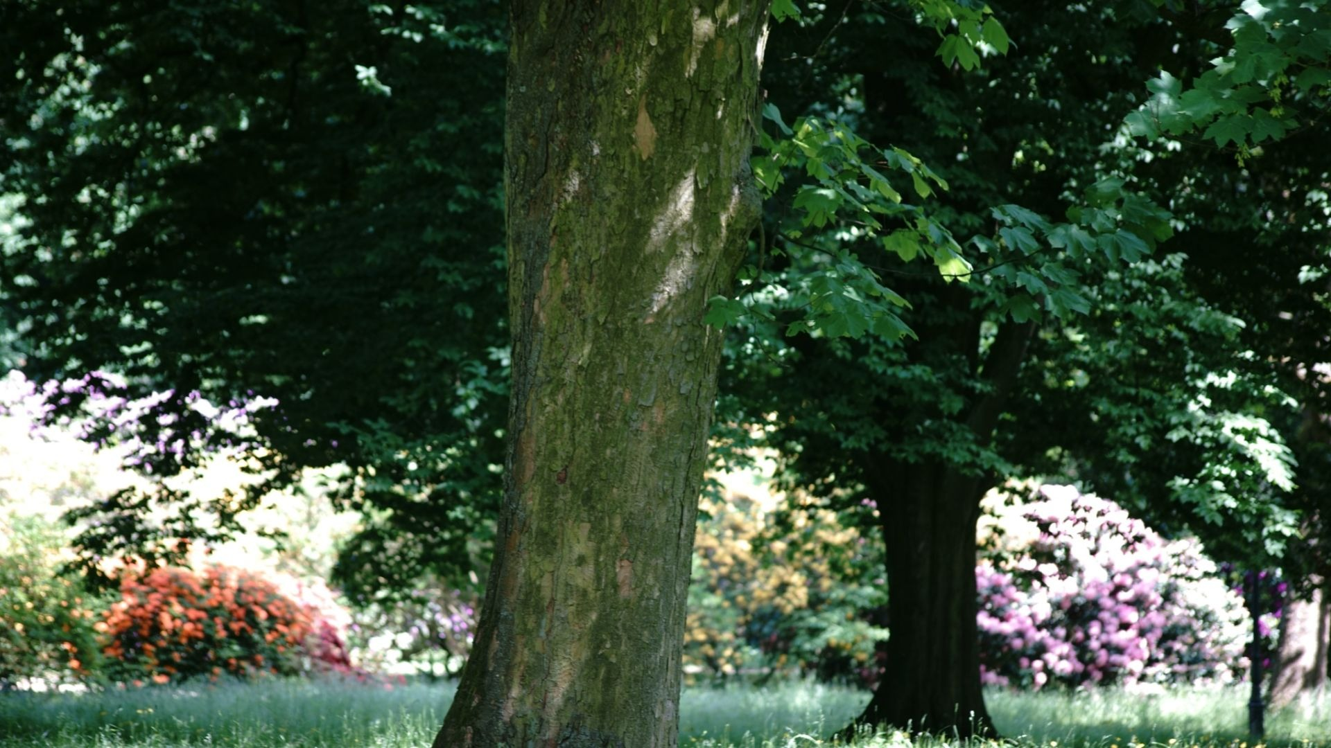 10 Drought Tolerant Trees That Will Throw Shade