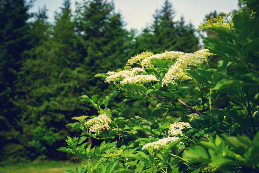 Fast-Growing Small Shade Trees | Arbor Day Blog