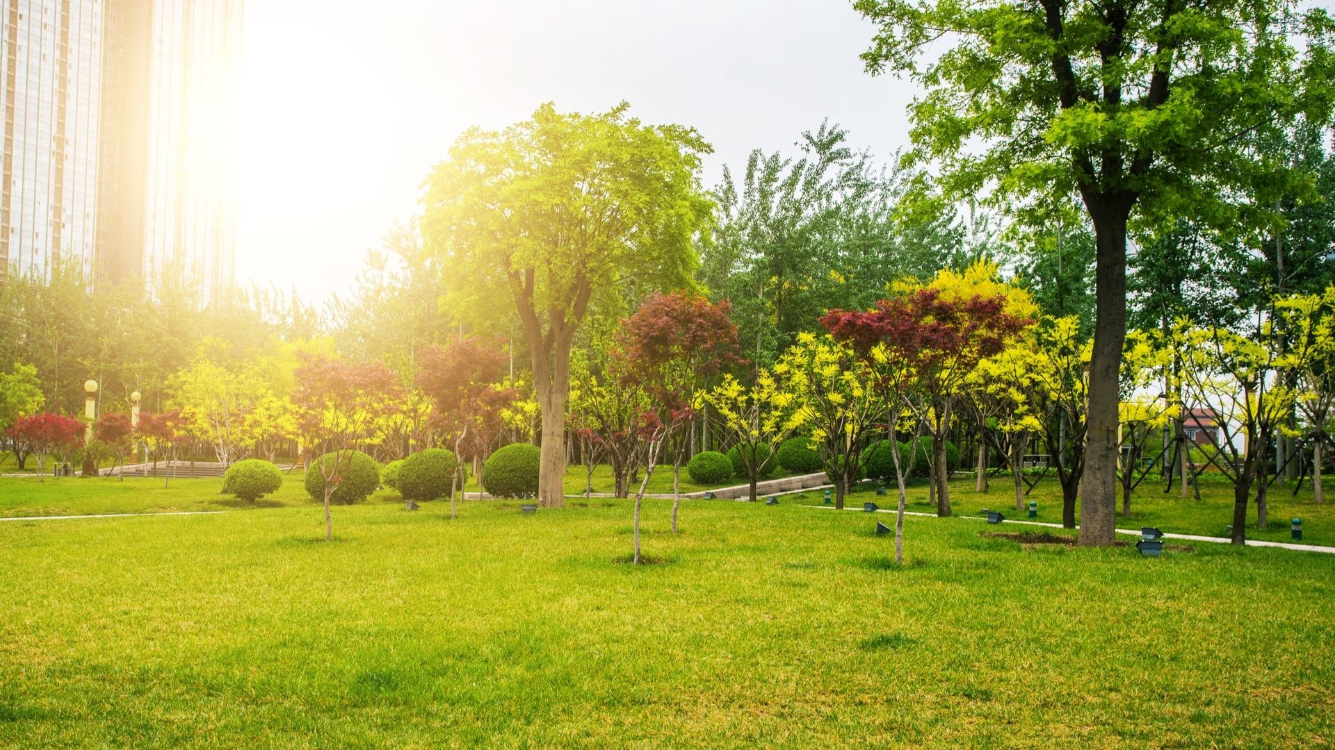 6 Ways Urban Trees Make You More Active Outdoors • Arbor ... on Urban Living Outdoor id=70979
