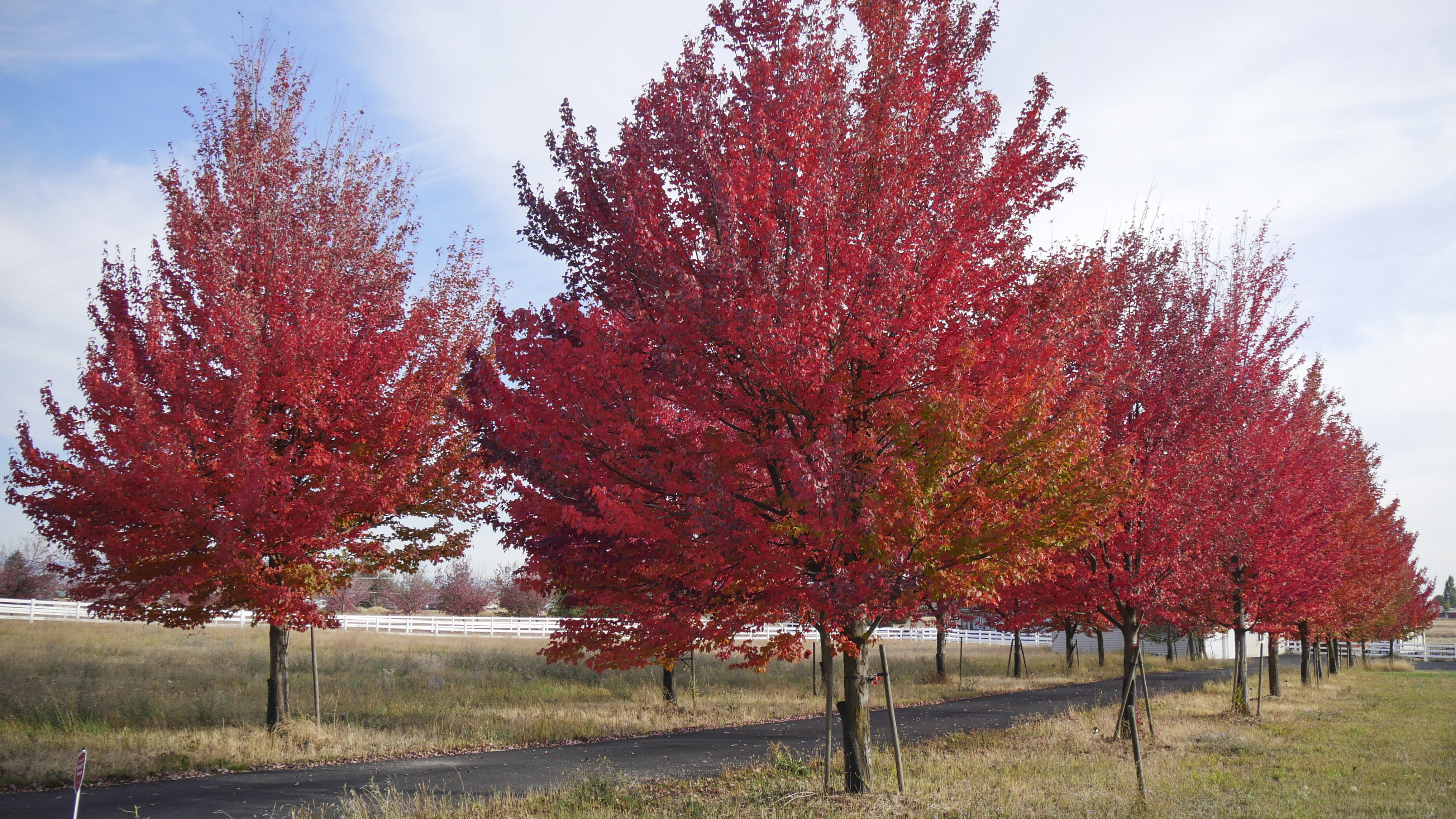 Trees That Flaunt Brilliant Fall Color