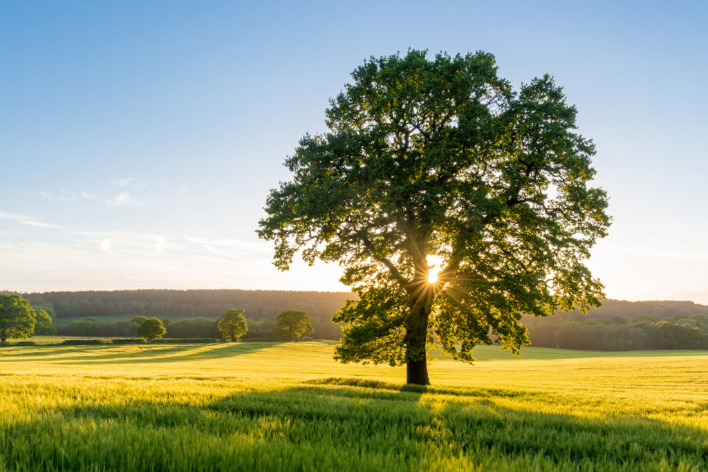 9 Trees that Can Survive Flooding | Arbor Day Blog