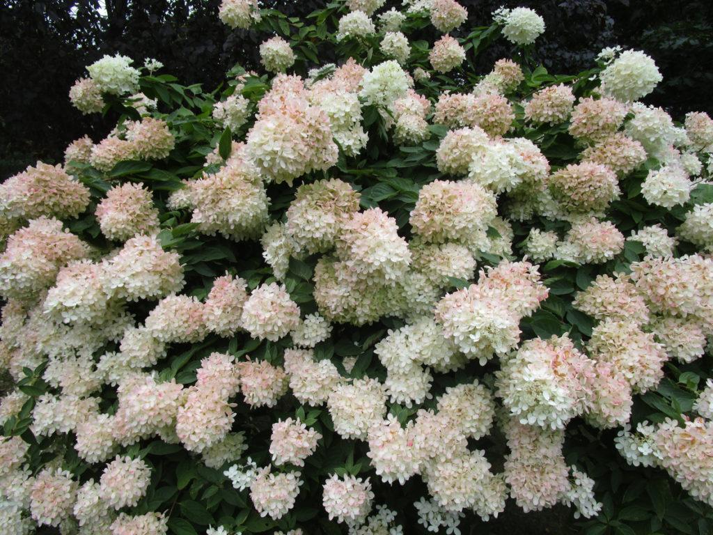 Top 10 Flowering Trees