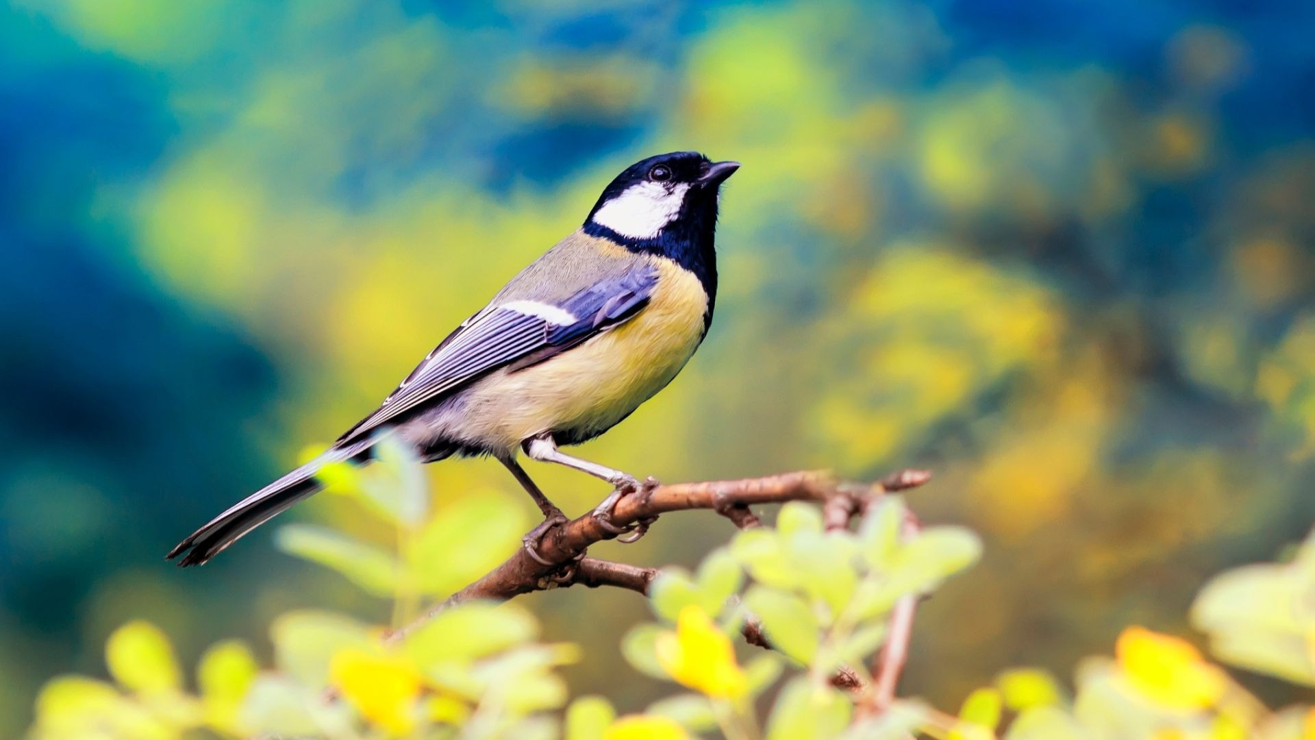 What a tree is to a bird | Arbor Day Blog