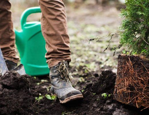 Arbor Day Blog | Tree Care & Planting